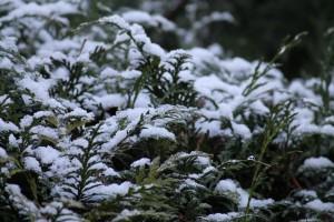 Photos d'hiver img_1569-300x200
